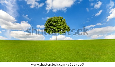 Maple tree on a meadow against a blue sky