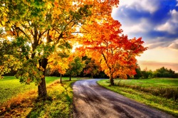 Maple trees with coloured leafs and asphalt road at autumn/fall daylight.Relaxing atmosphere. Countryside landscape, cloudy sky, maple tree