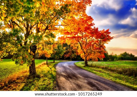 Maple trees with coloured leafs and asphalt road at autumn/fall daylight.Relaxing atmosphere. Countryside landscape, cloudy sky, maple tree  #1017265249