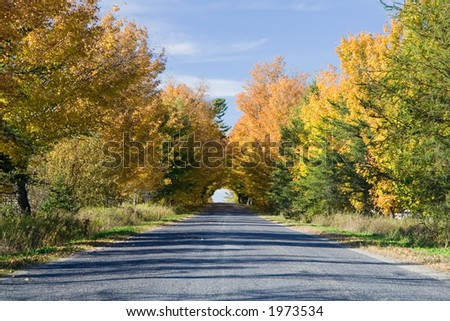 Maples reaching out above a road to form a colorful tunnel.
