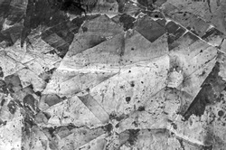 marble surface texture in black and white tone