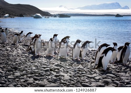 march of the penguins, Antarctica