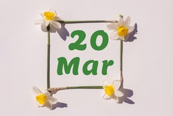 March 20th. Day 20 of month , calendar date. Frame from flowers of a narcissus on a light background, pattern. View from above. Spring month, day of the year concept