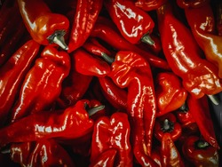Marconi Red Sweet Pepper. (Dramatic effect)