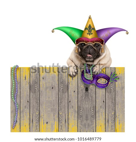 Mardi gras carnival pug dog with  harlequin jester hat and venetian mask hanging on wooden fence, isolated on white background