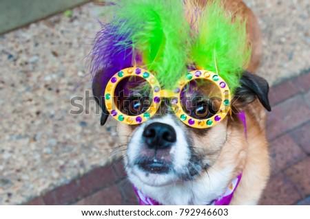 Mardi Gras Dog Costume