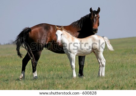 Mare and Colt on a ranch