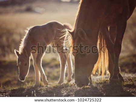 Mare and Foal #1024725322