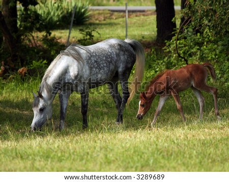 Mare and foal #3289689