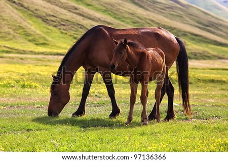 Mare and foal in the mountains