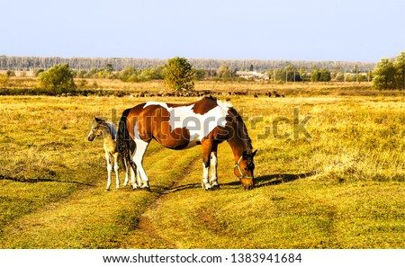 Mare and foal on rural road. Horse farm pasture with mare and foal. Mare and foal grazing on horse farm #1383941684