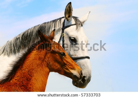 Mare and foal on the background of blue sky - stock photo