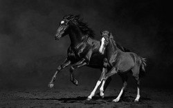 Mare and her foal, black-and-white photo