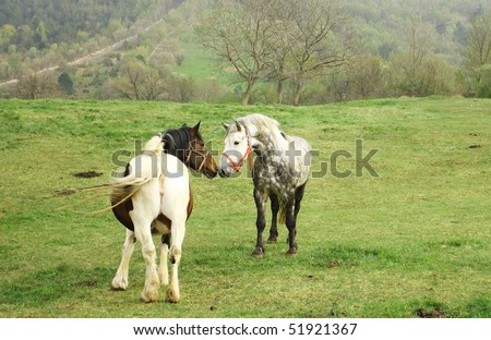 horses mating pics. Mare and male horse mating