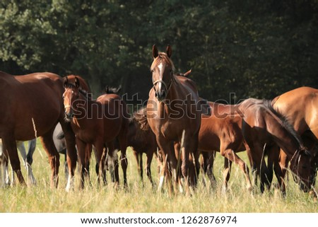 Mare and offspring in the pasture. #1262876974