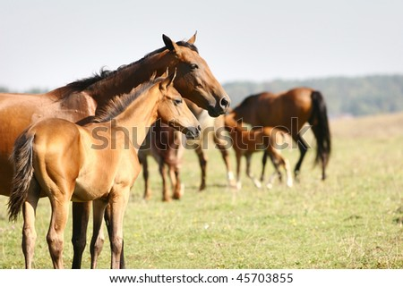mare with foal in herd