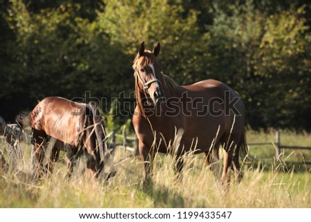 Mare with offspring on the background of trees. #1199433547