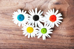 Marguerite flowers symbolizing the Olympic Rings, sport concept.