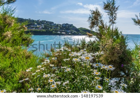 marguerites with beautiful sea in the background