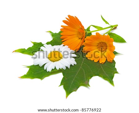 marigold flowers and daisies on a maple leaf closeup on white background