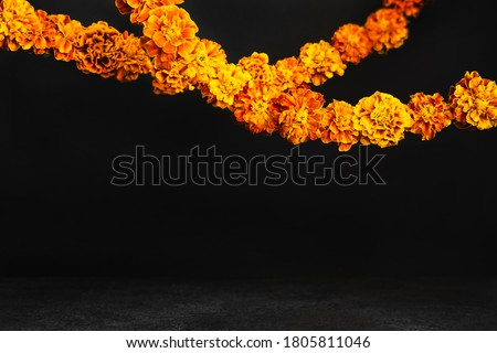 Marigold flowers Garlands on black. Dia de los muertos day, day of the dead or halloween background, copy space