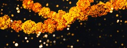 Marigold flowers Garlands on black. Dia de los muertos day, day of the dead or halloween banner, copy space.
