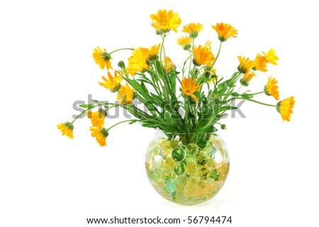 Marigold flowers in a vase with colorful crystal balls isolated on a white background