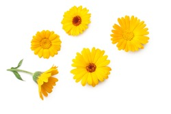 marigold flowers isolated on white background. calendula flower. top view