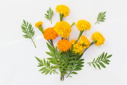 Marigold flowers so beautiful on white background
