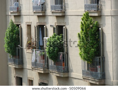 marihuana bushes on balconies of barcelona, spain, catalonia
