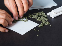 marijuana joints with 2 hand hemp roll on black wood background. Narcotic Recreational drugs concept. substance abuse.
