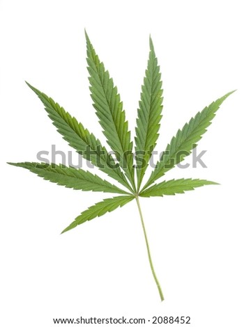 weed wallpaper. known as marijuana Fan of