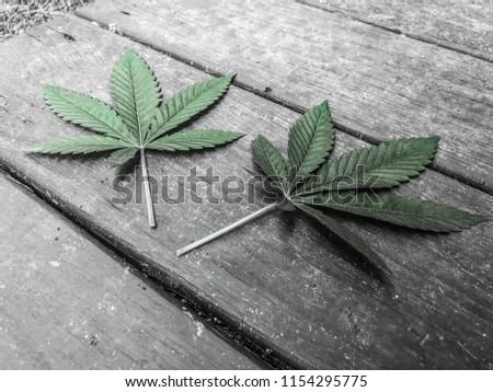 Marijuana leafs hi res #1154295775