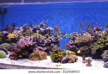 marine aquarium, coral aquarium