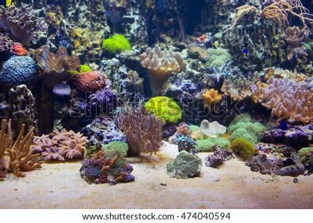 marine aquarium with corals...