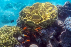 Marine coral reef at the Red Sea, Middle East