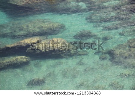 marine environment and beach