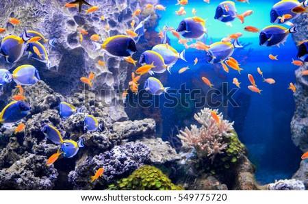 marine fish #549775720
