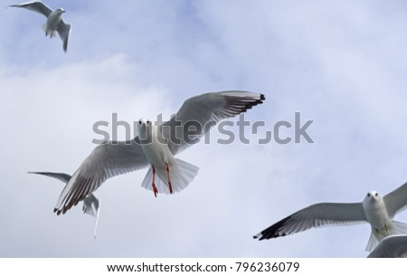 marine gulls on a blue background #796236079