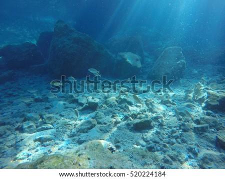 marine landscape with underwater view #520224184
