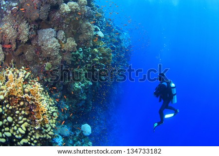 Marine Life in the Red Sea #134733182