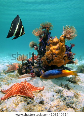 Marine life underwater sea in the Caribbean with tropical fish, sea sponges, marine worms and starfish