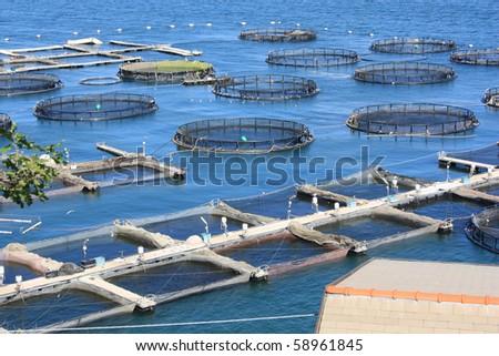 marine open water fish farm in La Spezia Italy