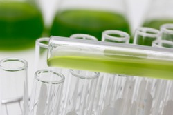 Marine plankton or Microalgae culture into a test tube in laboratory, Green algae or phytoplankton can produce biofuel industry, Algae fuel, food, industries or biotechnology is developing sustainably