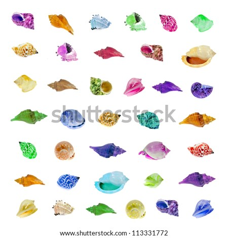 marine sea shell isolated on white background