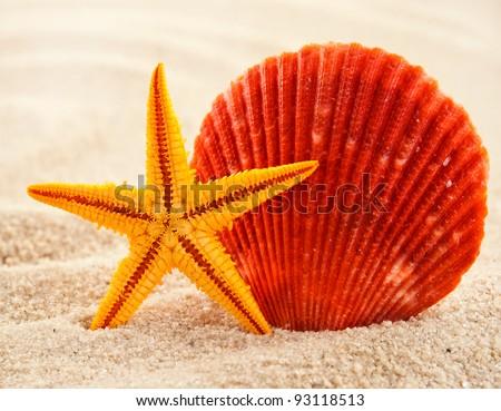 Marine themed still life of beautiful seashell and sea-star on a sand.