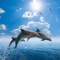 Marine wildlife background - dolphins jumping out of blue sea, seagulls fly high in blue sky with white clouds and bright sun