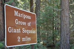 Mariposa Grove of Giant Sequoias sign