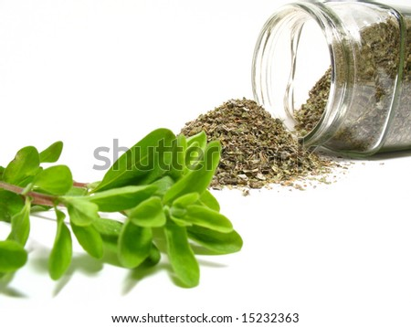 Marjoram, detail fresh marjoram and dry-up herb - stock photo