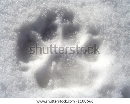 Mark of a dog on snow.